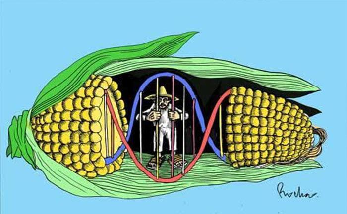 El último veto de Rafael Correa dio luz verde al ingreso de semillas transgénicas al Ecuador