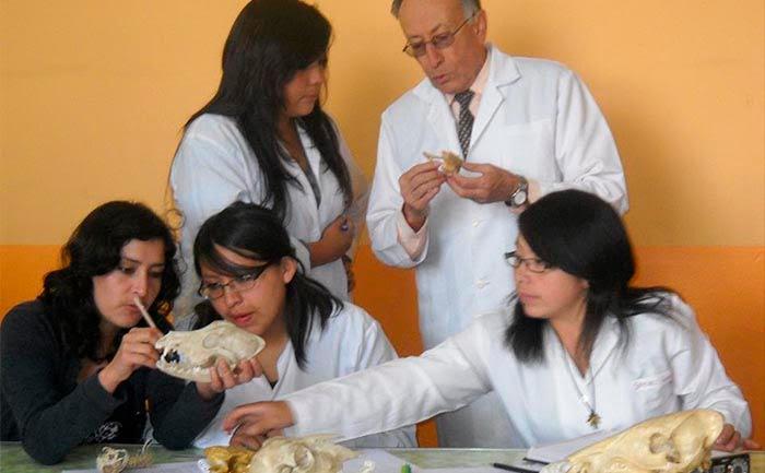 Dipsas oswaldobaezi: nueva especie de Culebra Caracolera de la Fauna Ecuatoriana