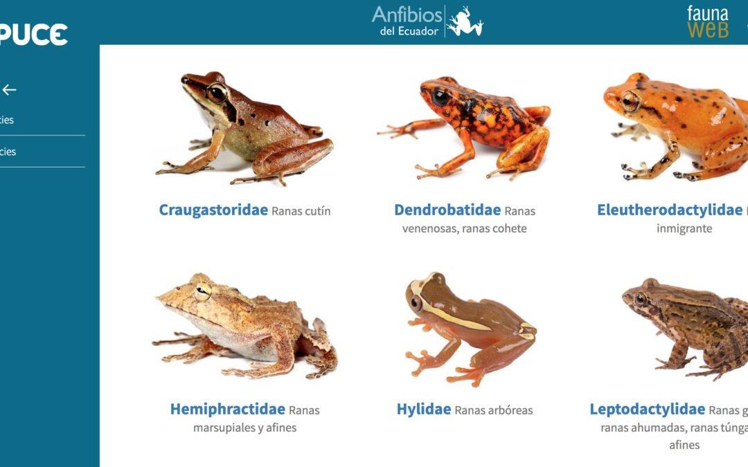 BIOWEB Ecuador: enciclopedia virtual de la diversidad biológica del país